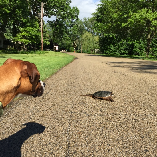 Hey, turtle. Want to be my best friend and go on adventures?