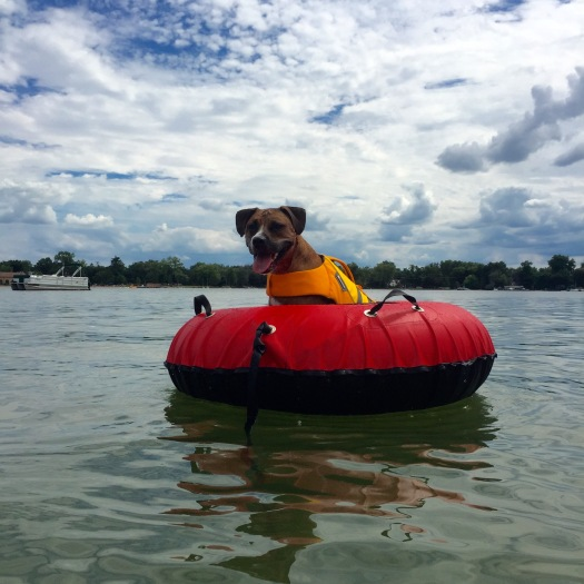Roo on a Tube